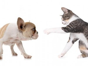 Health and medical exams for dogs and cats