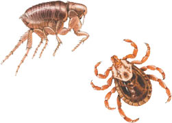 Questions about Fleas and Ticks